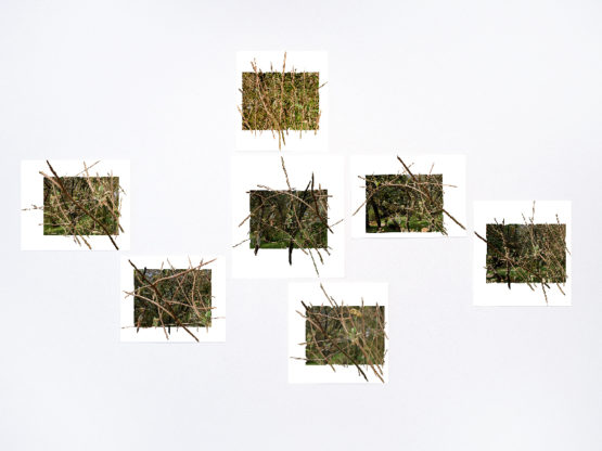 Branche chaotique