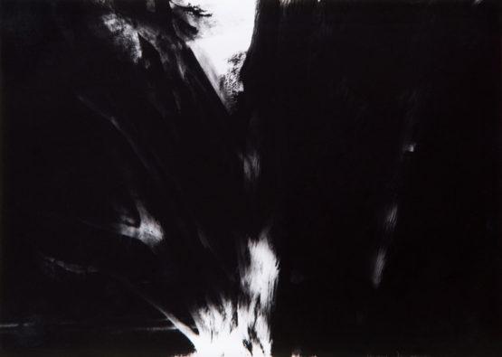 植物黑白攝影